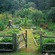 gardener in garden